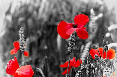Remembrance Sunday Parade and Services